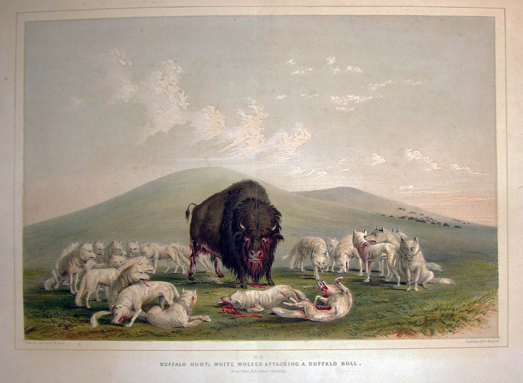 CATLIN, George (1796-1872). Plate No. 10 Buffalo Hunt, White Wolves attacking a Buffalo Bull