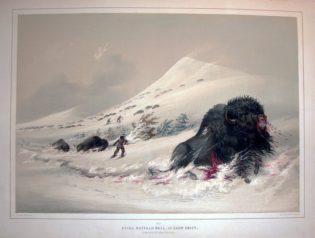 CATLIN, George (1796-1872). Plate No. 17 Dying Buffalo Bull, in Snow Drift