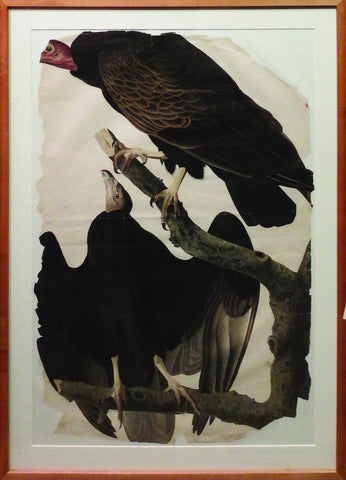 "AUDUBON, John James (1785-1851) - HAVELL, Robert (1793-1878) - HAVELL, Henry Augustus (1803-?). Turkey Buzzard (Cathartes atratus). Proof, or pattern, plate for plate 151 of ""The Birds of America"". London: Robert Havell, Jr., 1832."