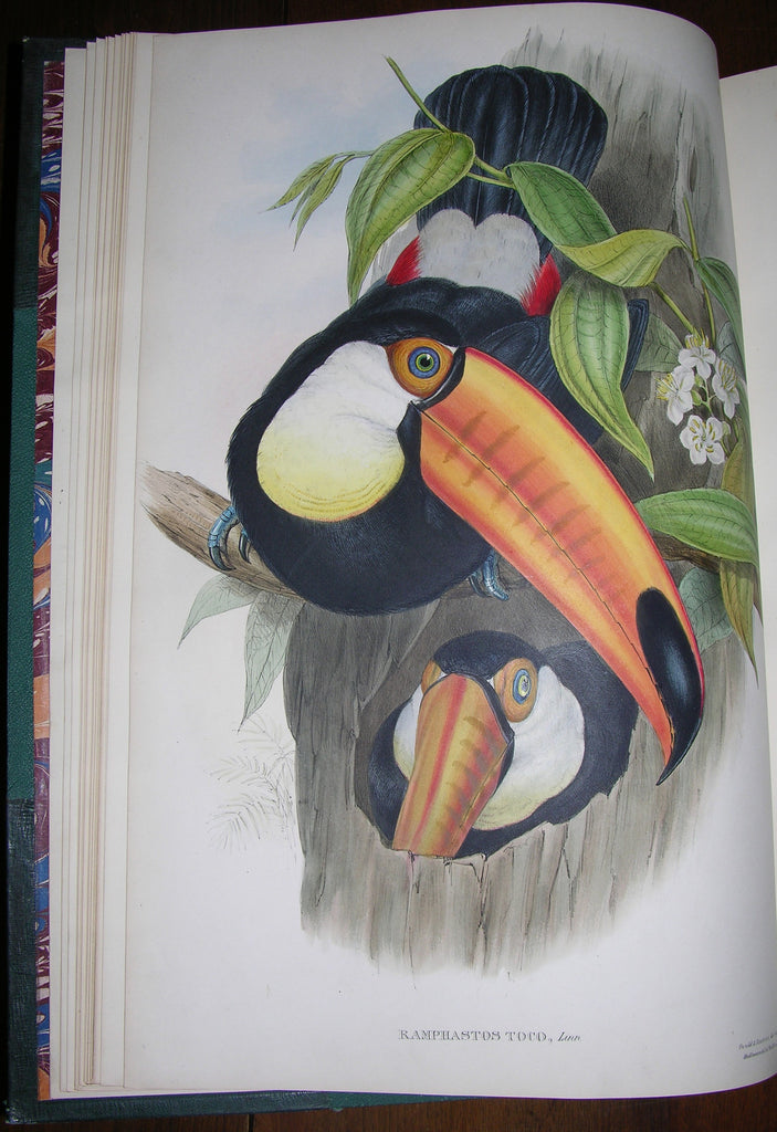 GOULD, John (1804-1881). A Monograph of the Ramphastidae, or Family of Toucans. London: Taylor and Francis for the author [1852]-1854.