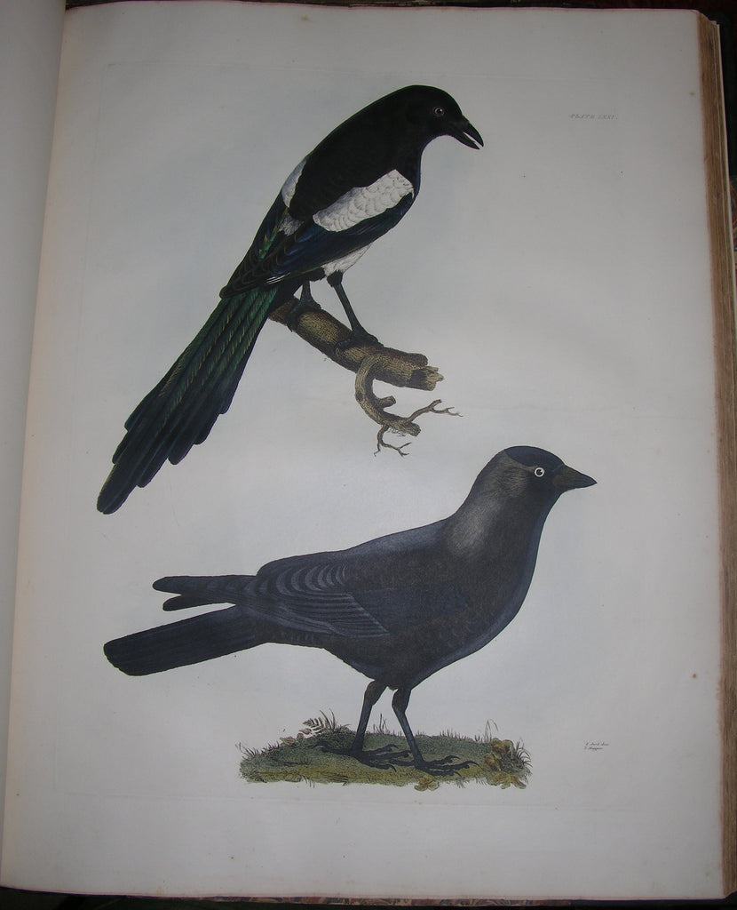 SELBY, Prideaux John (1788-1867). Plates to Selby's Illustrations of British Ornithology [and] ... Water Birds.  London: Henry G. Bohn, 1841.