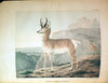 DOUGHTY, John and Thomas(1793-1856). The Cabinet of Natural History and American Rural Sports. Philadelphia: J. & T. Doughty, 1830-1833