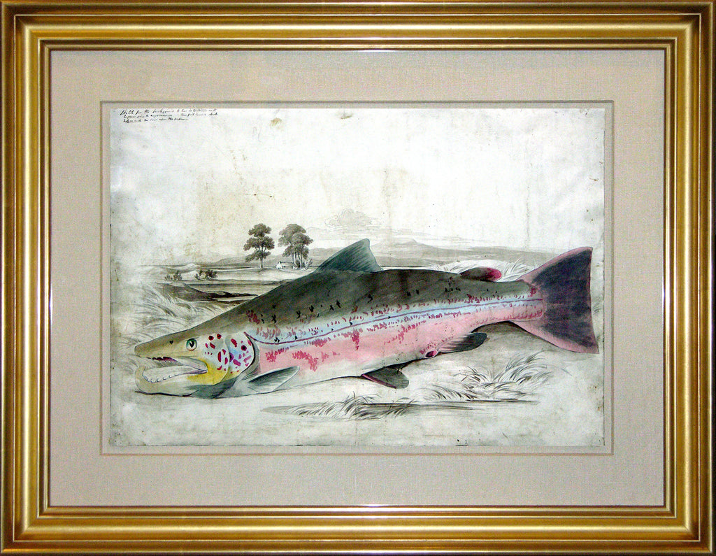 JARDINE, Sir William (1800-1874). A MAGNIFICENT ARCHIVE OF ORIGINAL MATERIAL: ORIGINAL DRAWINGS, WATERCOLOURS, AND PROOFS FOR JARDINE'S MAGNUM OPUS THE BRITISH SALMONIDAE. 1839-1841