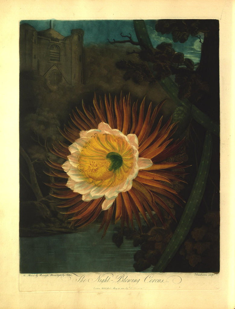 THORNTON, Dr. Robert John (1768 – 1837) Plate 14, The Night Blooming Cereus