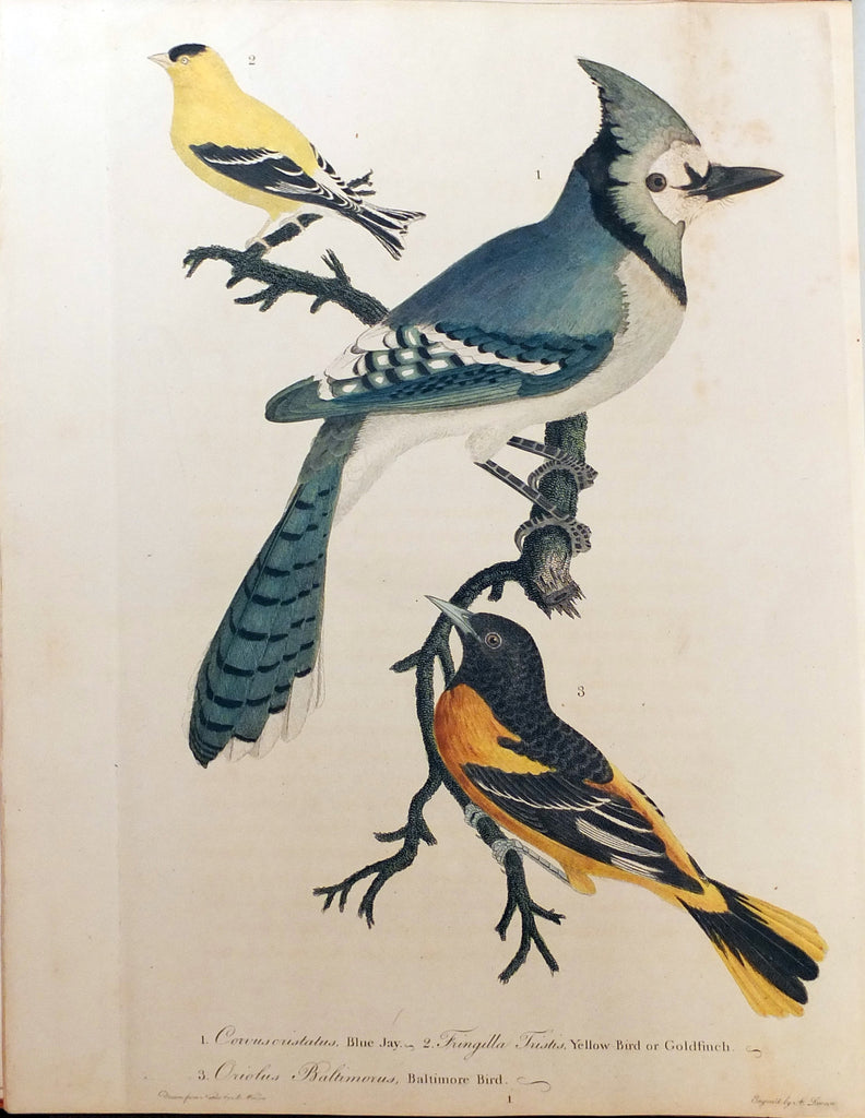 WILSON, Alexander (1766-1813) and George ORD (1781-1866). American Ornithology; or, The Natural History of the Birds of the United States. Philadelphia: Bradford and Inskeep, 1808-1814.