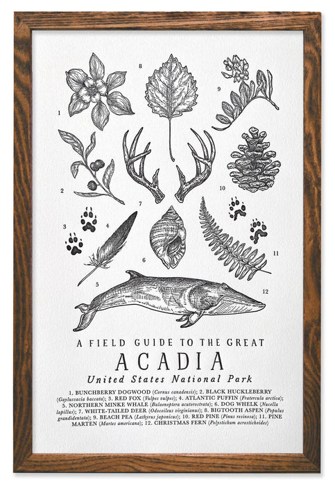Acadia National Park Field Guide Letterpress Print