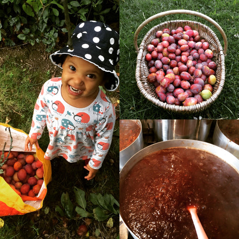 Foraging plums with Rayyan
