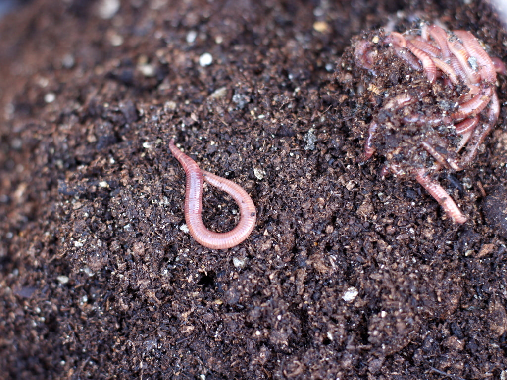 What You Sow - Worm farm worms at The Garden House, Brighton