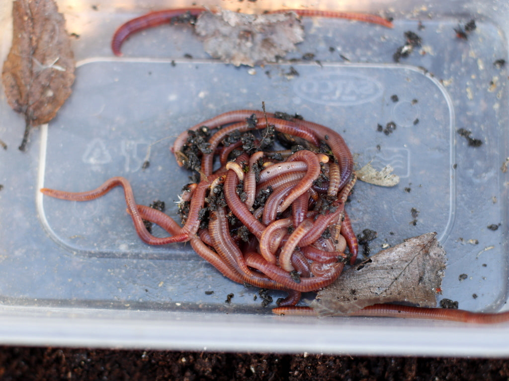 What You Sow  - Worm Farm worms at The Garden House, Brighton.