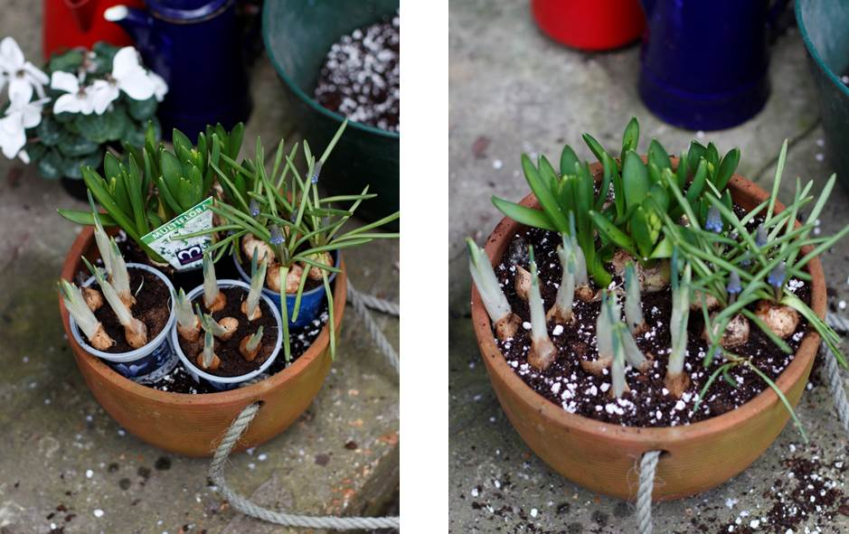 Planting bulbs in containers. What You Sow at The Garden House