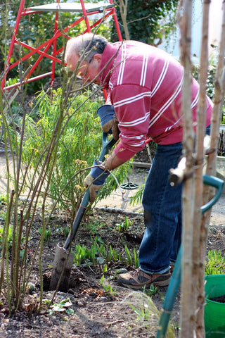 Moving alliums at the Garden House Brighton by What You Sow.