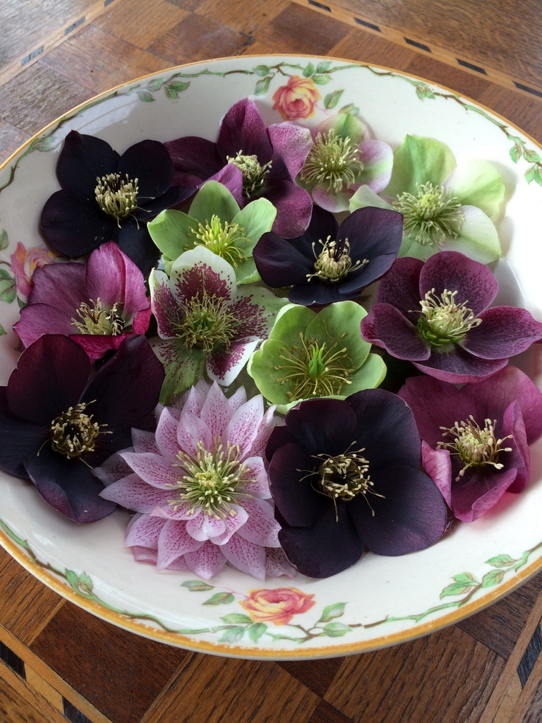 Hellebores at The Garden House. Photo by Mangia Bene Blog.