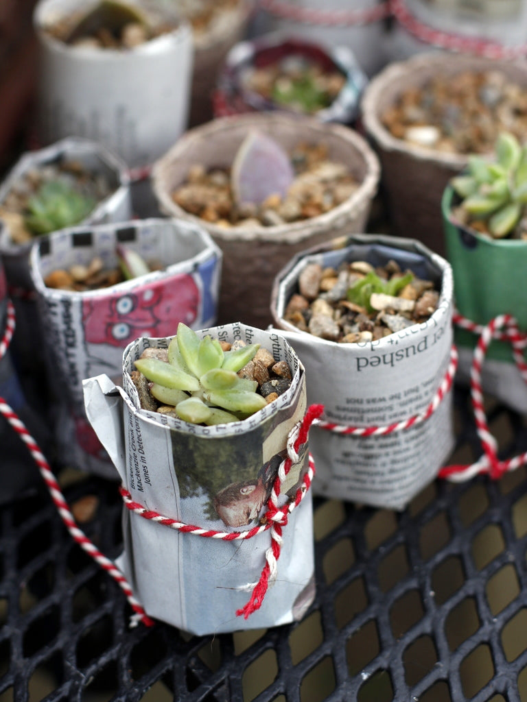 Echeveria in Paper Pots. What You Sow at The Garden House