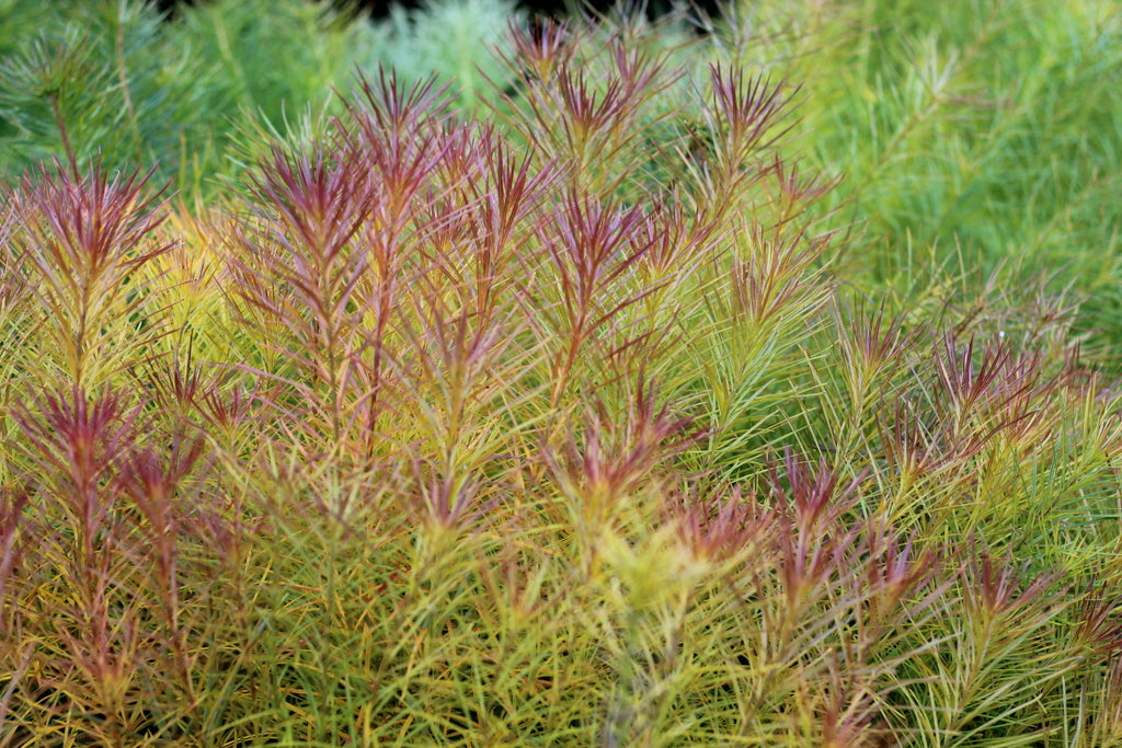 Sussex Prairie Gardens by What You Sow