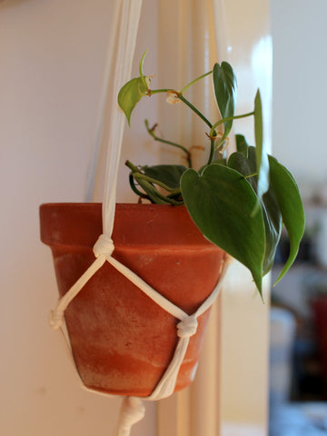 White Macramé Plant Hanger from Super + Super