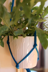 Macramé Plant Hanger from Super + Super at What You Sow