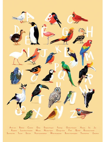 Avian Alphabet A4 Giclée print by Sarah Edmonds