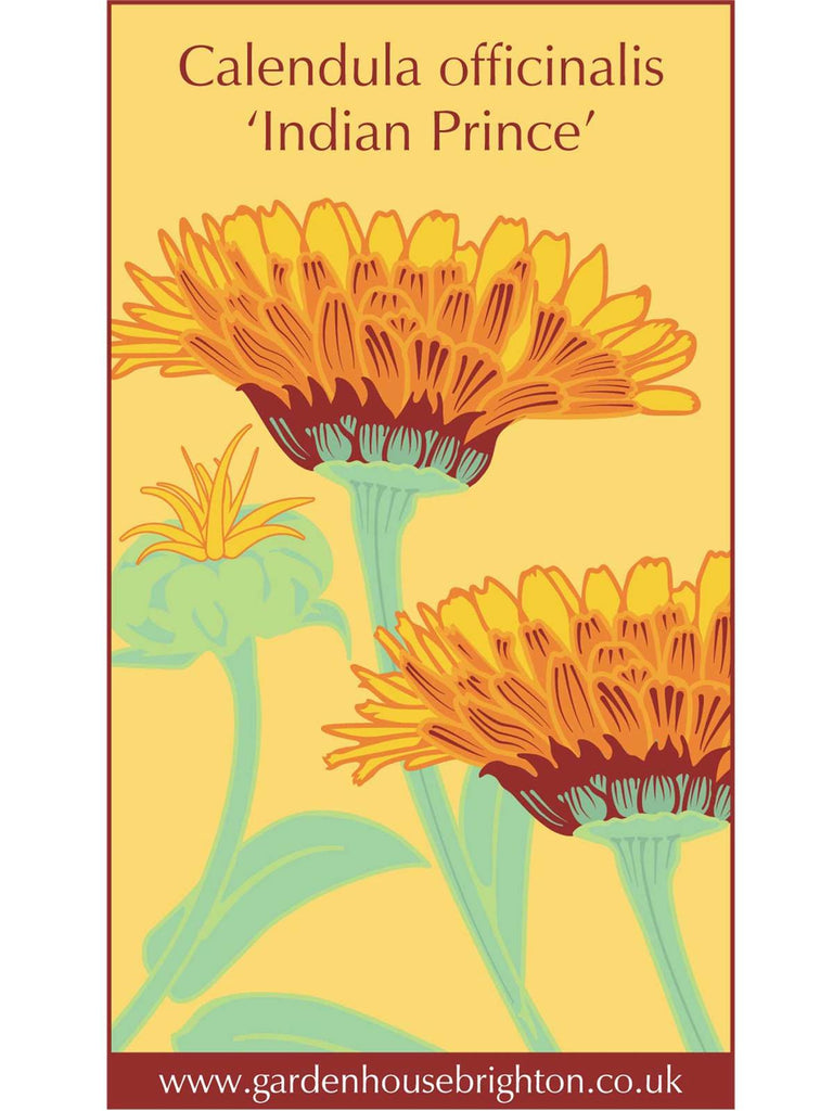 Calendula officinalis - 'Indian Prince'