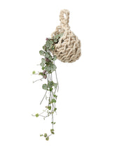 Crochet cocoon planter by Cocoon and me | What You Sow