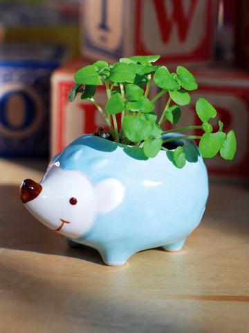 Hedgie Green Kawaii Hedgehog Planter