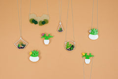 Cacti & Terrarium range by Finest imaginary at What You Sow