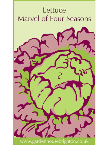 Lettuce - Marvel of Four Seasons