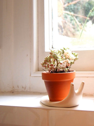 Mini Terracotta Plant Pot with Snail Saucer