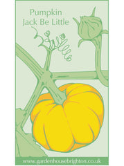 Pumpkin - Jack Be Little