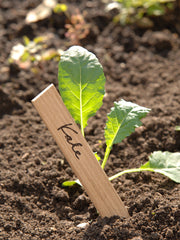 Large Wooden Plant labels from What You Sow
