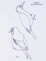 Bird Colouring Book