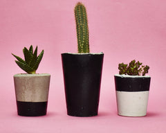 Tall Concrete Planter with tiny plant by Hi Cacti - Black