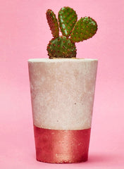 Tall Concrete Planter with tiny plant by Hi Cacti - Copper