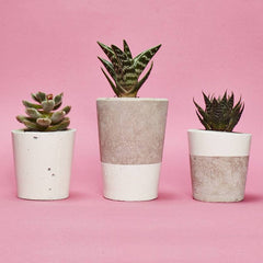 Small Concrete Planter with tiny plant by Hi Cacti - White