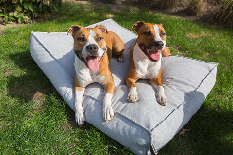 Fantail memory foam dog beds and baskets