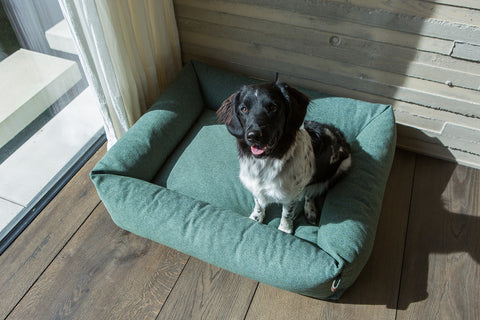 Fantail dog beds and accessories