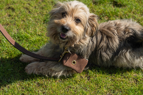 Fantail Design dog collar and accessories