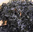 김가루 海苔粉/SHREDDED SEASONED SEAWEED/1kg/PKT $22