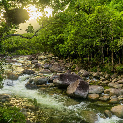 Mossman Gorge river in Daintree National Park.