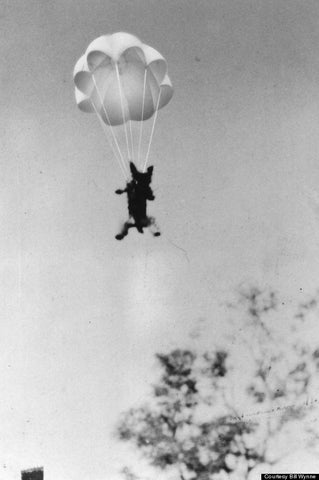 Smoky parachuted 9.1m out of a tree, using a parachute made especially for her.