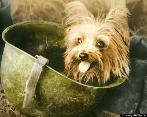 'Angel from a Foxhole' Lest We Forget our Soldiers and our Dogs of War