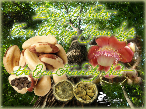 Brazil Nuts can change your life with their good nutrition.