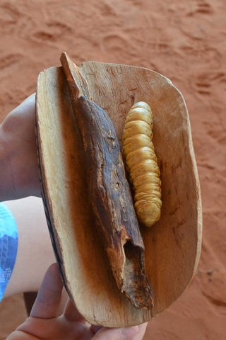 Indigenous bush food - witchetty grub