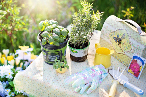 Herb pot plants on garden table with potting tools and seeds.