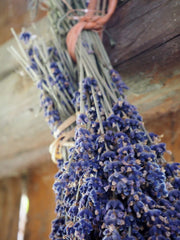 One of the most common flowers to dehydrate is Lavender
