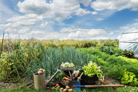 Vegetables on a farm - Backyard Homesteading in the Country