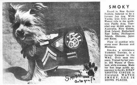"""Smoky has been called """"the first published post-traumatic stress canine""""."""