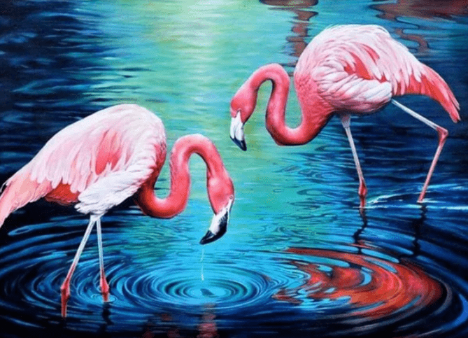 Flamingos in het Water
