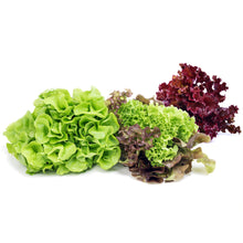 Load image into Gallery viewer, Mixed Lettuce