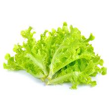 Load image into Gallery viewer, Green Lettuce
