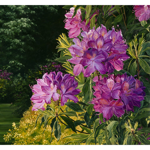 Spring light on the rhododendrons